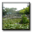 Taiwanese gardens - Teaching English in Taiwan