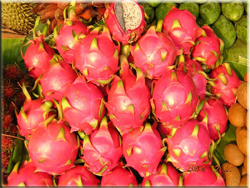 Dragon Fruit - ESL in Taiwan