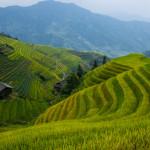 Taiwan Tea Plantations